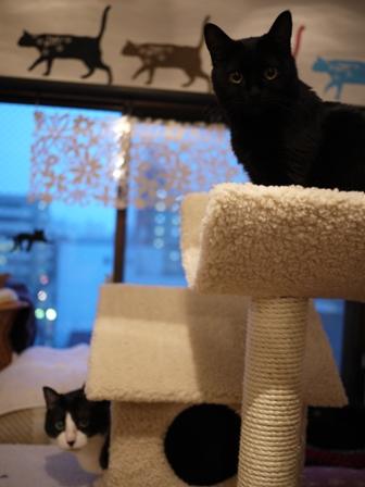 ふわふわ三角屋根おうちキャットタワー猫 空しぇるのぇるろった編。_a0143140_21293020.jpg