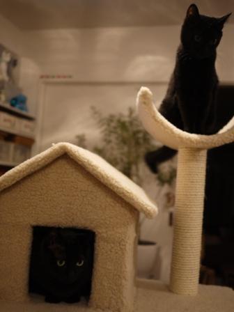 ふわふわ三角屋根おうちキャットタワー猫 空しぇるのぇるろった編。_a0143140_21301431.jpg