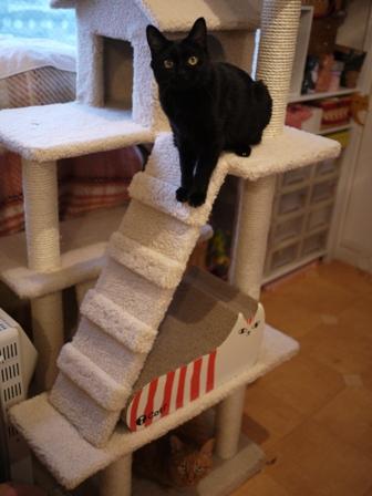 ふわふわ三角屋根おうちキャットタワー猫 空しぇるのぇるろった編。_a0143140_21325855.jpg