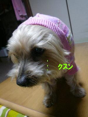 d0013645_14561852.jpg