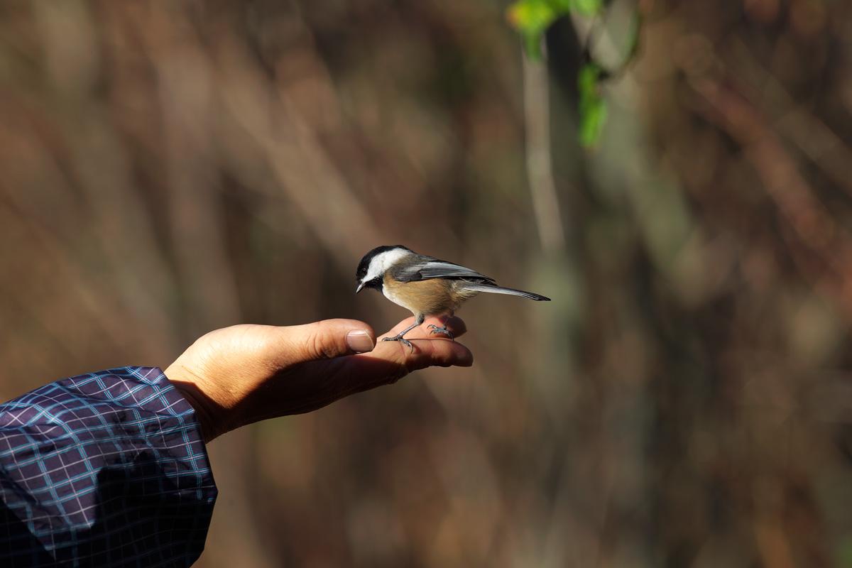 バンクーバーの小鳥類_d0013455_13543734.jpg