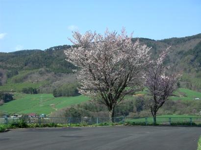 """~春が来たよ!~ """"お誂え向けの素""""もやってきたよ! オーダー三昧 編_c0177259_19494215.jpg"""
