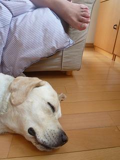 with dog その1  兄ちゃんと雪あそび♪ _a0165160_7424995.jpg
