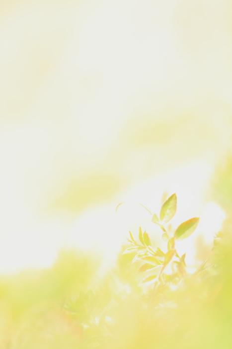■■ 春の息吹 ■■_c0195662_2221219.jpg