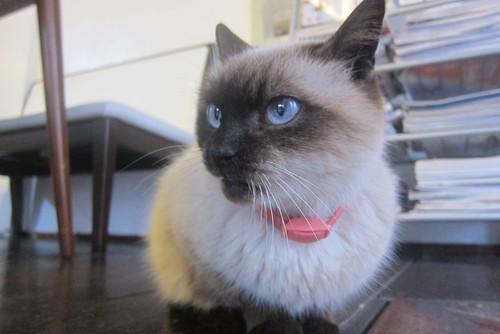 indoor cat (half)._c0153966_14191811.jpg
