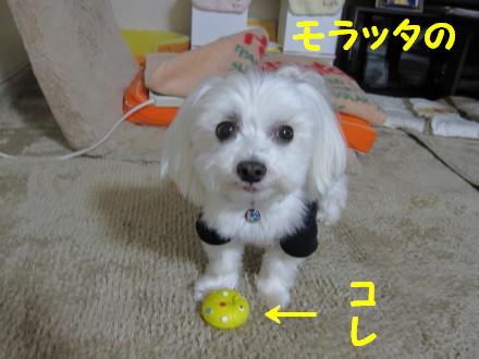 b0193480_15371969.jpg