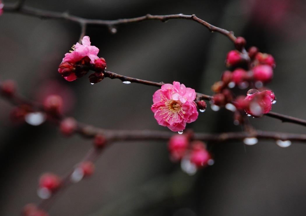 水戸偕楽園梅まつり  2012・02・25 <9>_e0143883_2031424.jpg