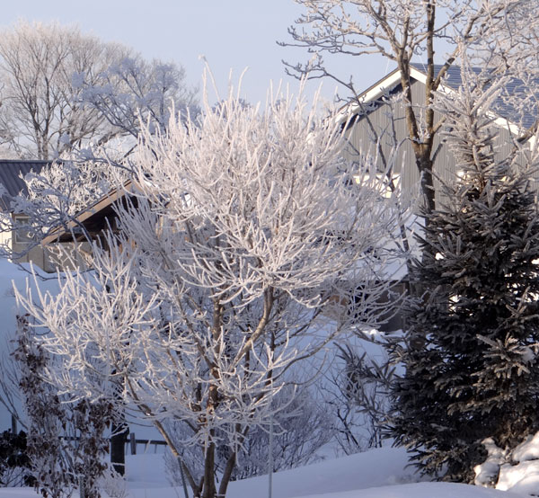 霧氷の朝 ・・・・・ 動画の追加あり^^_a0136293_16183478.jpg