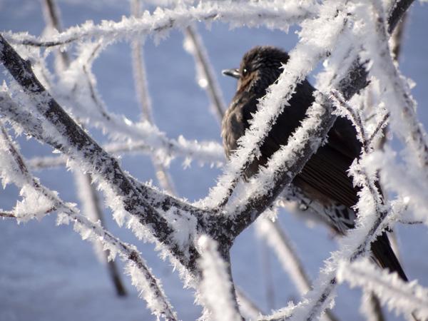 霧氷の朝 ・・・・・ 動画の追加あり^^_a0136293_16204289.jpg