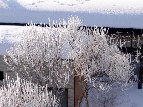 霧氷の朝 ・・・・・ 動画の追加あり^^_a0136293_16225360.jpg