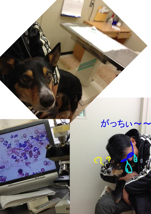 2012.3.1_c0203505_927419.jpg