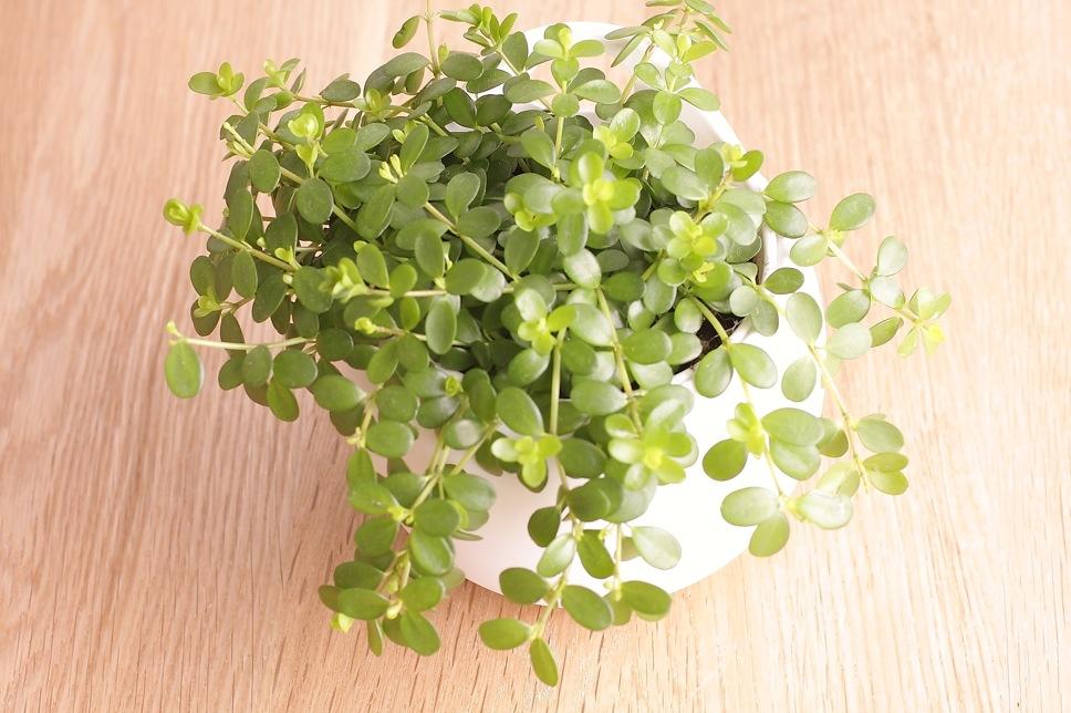 植物といっしょに_c0222817_20315840.jpg