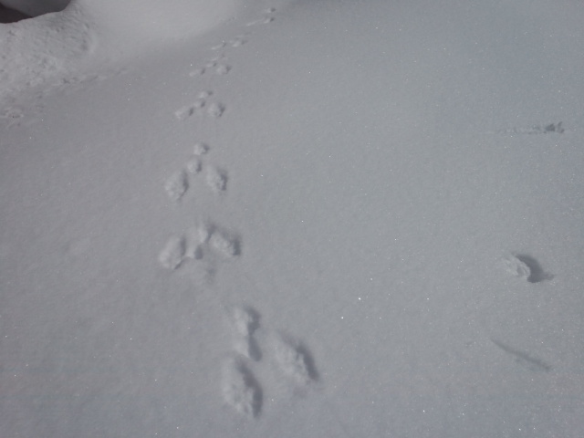久々の山スキー!!_f0101226_836714.jpg
