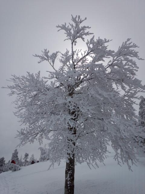 久々の山スキー!!_f0101226_9141094.jpg