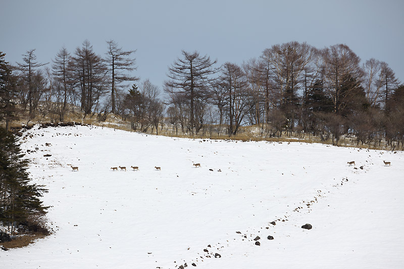 暖かな3月初日_b0179231_0471136.jpg