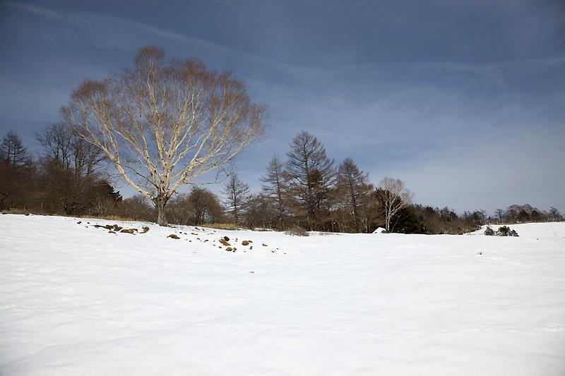 暖かな3月初日_b0179231_0472263.jpg
