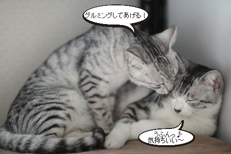 多頭飼いに向く子、向かない子_e0151545_20111092.jpg