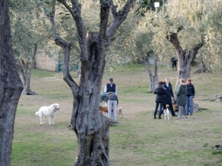 犬と猫@ニース、サン・ポール村_f0178060_2171845.jpg