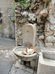犬と猫@ニース、サン・ポール村_f0178060_22155060.jpg