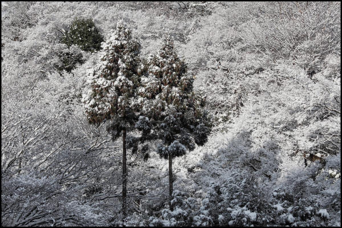 雪景色 <京都> 清水寺_f0021869_15204071.jpg