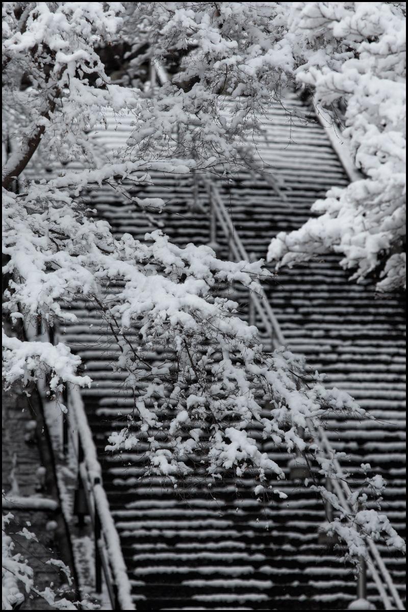 雪景色 <京都> 清水寺_f0021869_2214499.jpg