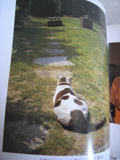 私の本だなから 2月 ~津高家の猫たち  阪神大震災に見舞われて~_c0138704_15122641.jpg