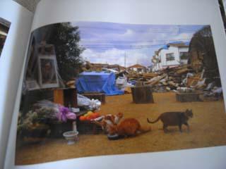 私の本だなから 2月 ~津高家の猫たち  阪神大震災に見舞われて~_c0138704_15131986.jpg
