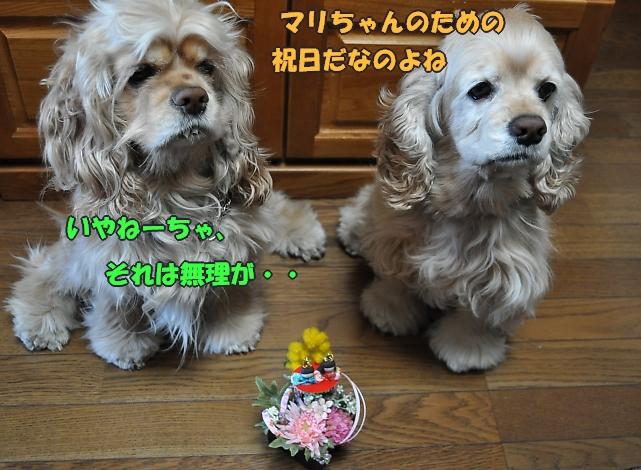 b0067012_18492645.jpg