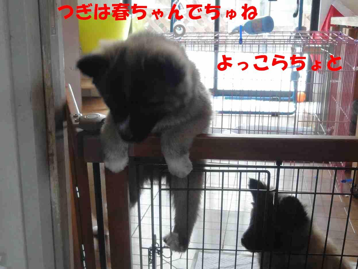 b0207320_22501819.jpg