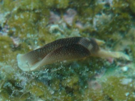 SMALL & BIG  FISH ~ の CUTTLE FISH !!!_a0189838_7593096.jpg