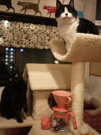 タリーズ円すいドリッパー&サーバーピンク猫 空ろった編。_a0143140_20524970.jpg