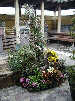 温泉花まつり_c0141652_14275397.jpg
