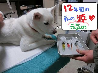 ヒコちゃん☆_b0059154_1718712.jpg