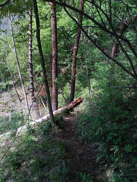 2010/05/13 神楽山 猿橋御前山_d0233770_22173230.jpg