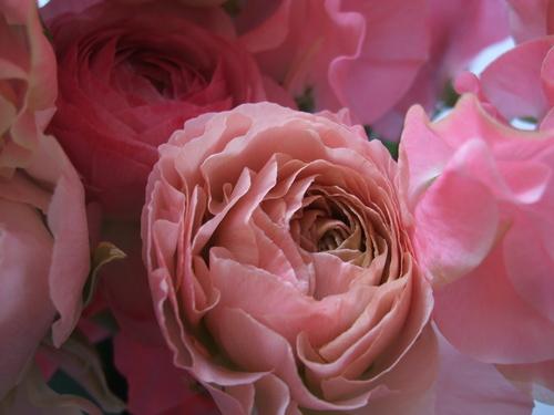 オークリーフ(ひな祭りの花束)_f0049672_12442996.jpg
