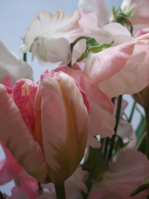 オークリーフ(ひな祭りの花束)_f0049672_12444092.jpg