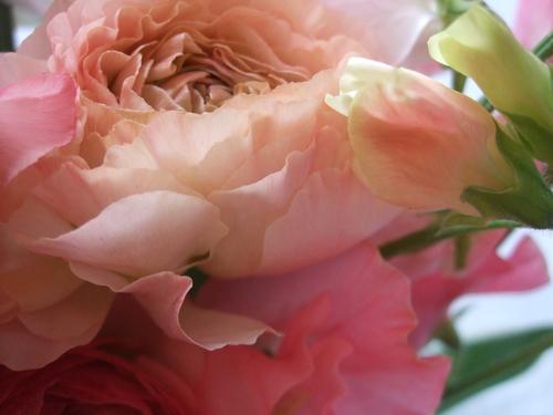 オークリーフ(ひな祭りの花束)_f0049672_1245110.jpg