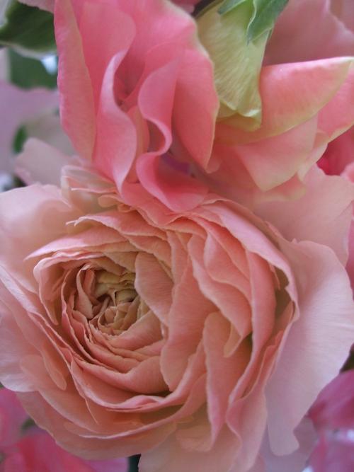 オークリーフ(ひな祭りの花束)_f0049672_1245841.jpg