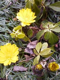 春来ました_f0156675_1149953.jpg