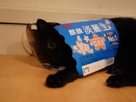 麒麟淡麗生花見缶猫 のぇる編。_a0143140_2263788.jpg