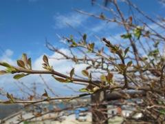 3月 4日  青い空と海はやっぱりいいものですね。_b0158746_2118978.jpg