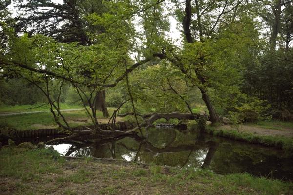 紀行写真展3 ヴァンセンヌの森(23)_e0129750_1034392.jpg