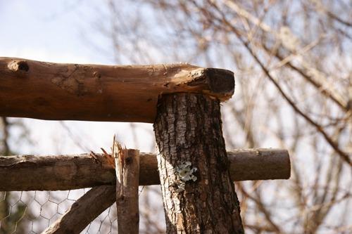 柵の一部完成~♪_f0106597_1953316.jpg