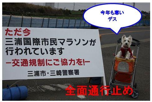 三浦国際市民マラソン_a0161111_1523866.jpg