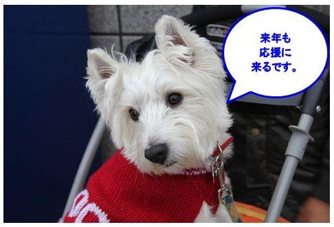 三浦国際市民マラソン_a0161111_15323434.jpg