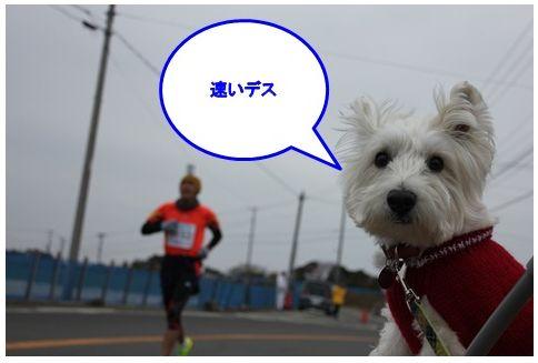 三浦国際市民マラソン_a0161111_1574144.jpg