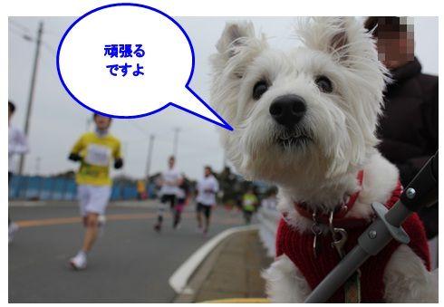 三浦国際市民マラソン_a0161111_159263.jpg