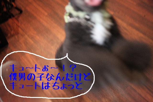 b0130018_2211821.jpg
