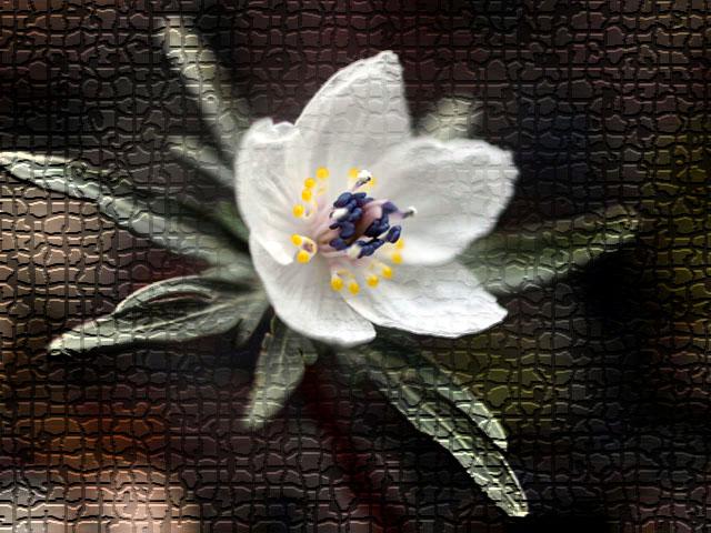 f0103534_20105878.jpg