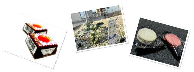 ストロベリーチロル、畑、初マカロン
